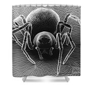 Dictynid Spider Shower Curtain