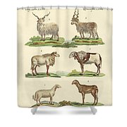Different Kinds Of Sheep Shower Curtain