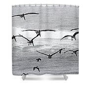 Dinner Time At Pelican Land Shower Curtain