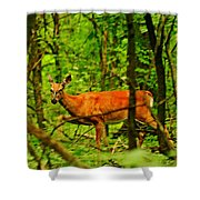 Doe On The Move Shower Curtain