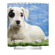 Dogo Argentino Puppy Greeting Card