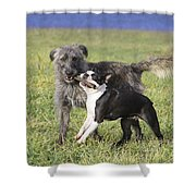 Dogs Playing With Stick Shower Curtain