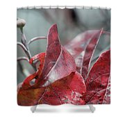 Dogwood  Autumn Shower Curtain