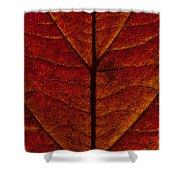 Dogwood Leaf Backlit Shower Curtain