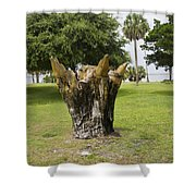 Dolphin Tree In Melbourne Beach Florida Shower Curtain