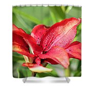 Double Asiatic Lily Named Cocktail Twins Shower Curtain