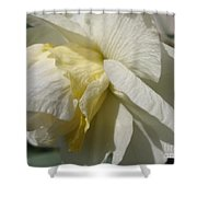 Double Daffodil Named White Lion Shower Curtain