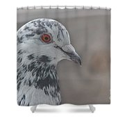 Dove Pigeon Shower Curtain