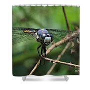 Dragonfly 71 Shower Curtain