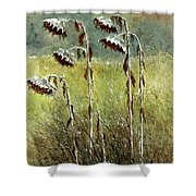 Dried Up Sunflower Patch Shower Curtain