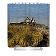Driftwood In Beach Grass Shower Curtain