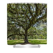 Dripping With Spanish Moss Shower Curtain