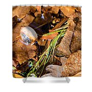 Dry Acorn And Oak Leaves Shower Curtain