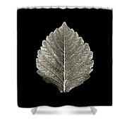 Dry Leaf 1 Shower Curtain