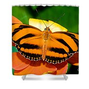 Dryadula Butterfly Shower Curtain