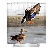 Ducking Around Shower Curtain