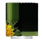 Dwarf Sunflower Named Teddy Bear Shower Curtain