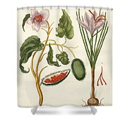 Dye Plants Shower Curtain