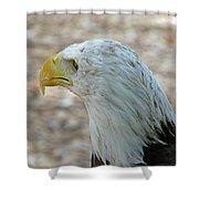 Eagle 3  Shower Curtain