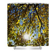 Early Autumn  Shower Curtain
