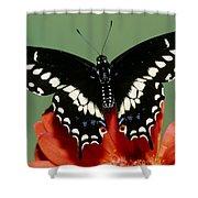Eastern Black Swallowtail Butterfly Shower Curtain