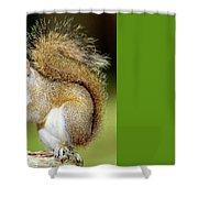 Eastern Gray Squirrel Shower Curtain