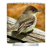 Eastern Kingbird Shower Curtain