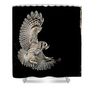 Eastern Screech Owl Shower Curtain
