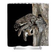 Eastern Screech Owls At Nest Shower Curtain