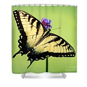 Eastern Tiger Swallowtail Butterfly Square Shower Curtain