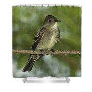 Eastern Wood Pewee Shower Curtain