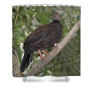 Edwards Pheasant Shower Curtain