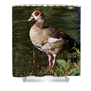 Egyptian Goose Shower Curtain