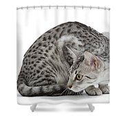Egyptian Mau Cat Shower Curtain