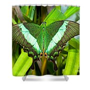 Emerald Swallowtail Butterfly Shower Curtain