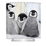 Emperor Penguin Chicks Shower Curtain