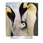 Emperor Penguin Parents With Chick Shower Curtain