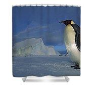 Emperor Penguins At Midnight Antarctica Shower Curtain