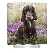 English Cocker Spaniel Puppy Shower Curtain