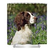 English Springer Spaniel Dog Shower Curtain