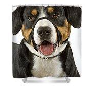 Entlebuch Mountain Dog Shower Curtain