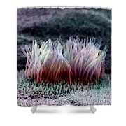 Epithelial Cells Shower Curtain