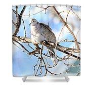 Eurasian Collard Dove Shower Curtain