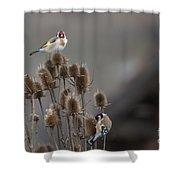 European Goldfinch Shower Curtain