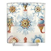 Examples Of Siphonophorae Shower Curtain