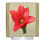 Exotic Red Tulip In Bold And Two Border Patterns Tiny Sparkle Parallal Horizontal Strips Summer Flow Shower Curtain