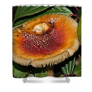 Fairy Mushrooms Shower Curtain