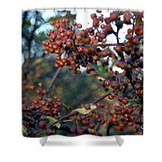 Fall Fruit Shower Curtain