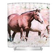 Family Of Horses Shower Curtain