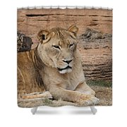 Female African Lion Shower Curtain